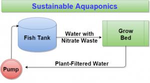 Sustainable Aquaponics